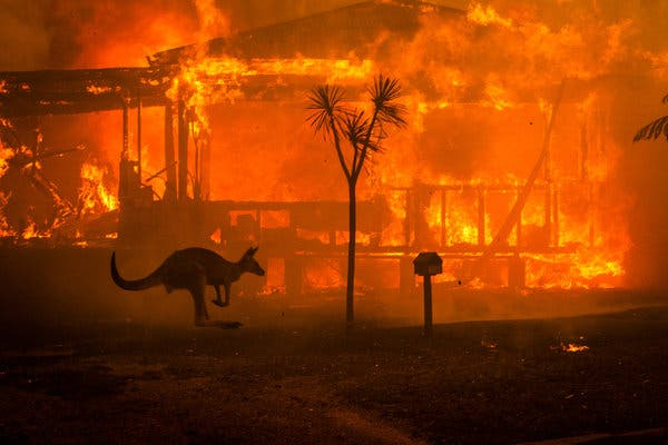 One of the many fires in Australia. Here we can see a house up in flames and a kangaroo ping away to safety. Photo courtesy of <i>The New York Times</i>.